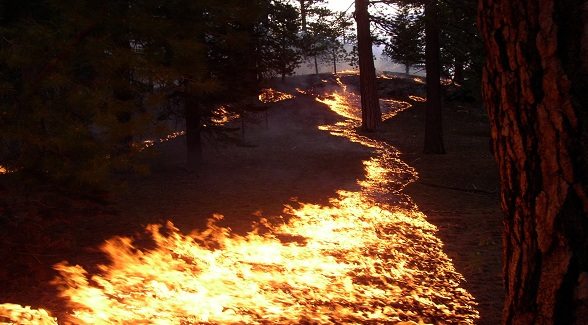 Online Exclusive: Western Wildfires – Fighting Fire with Fire