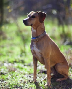 Land's Best Friend: The Mountain Cur | The Land Report