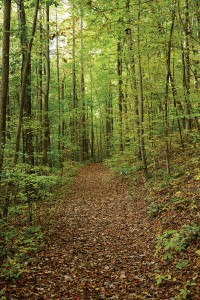 More than 80 percent of Falling Waters will remain undeveloped leaving miles of pristine forest and wooded trails for generations to come.