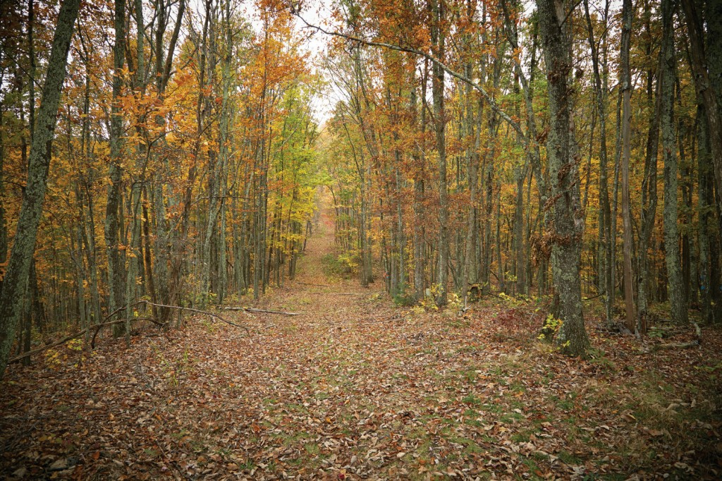 Miles of trails and paths crisscross The Retreat.