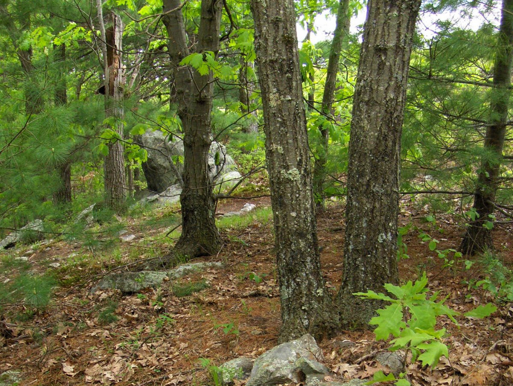 In May, the highest court in Massachusetts ruled that conservation land cannot be taxed. The case centered on a 120- acre woodland parcel in Hawley,...