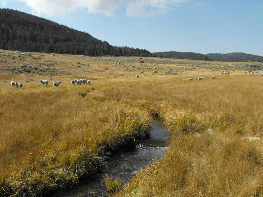 A Wyoming landowner has agreed to a plan that protects a historic stock rest in the northern part of the state, near the Big Horn Mountains. Rancher...