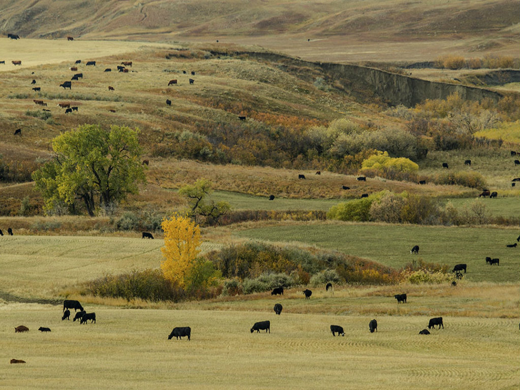 With a long history of stable ownership and a highly respected reputation in reputation ranch country, IX Ranch is one of Montana's great cattle...