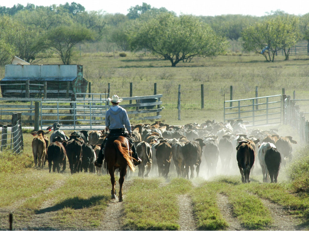 No. 7 King Ranch Heirs 911,215 acres King Ranch, Inc. (KRI) marked its 160th year of continuous operations in 2013. While remaining true to the...