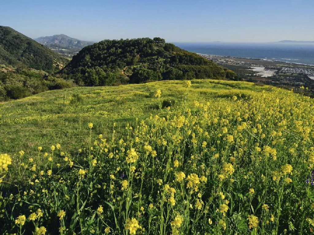 Kerry Mormann & Associates www.coastalranch.com (805) 682-3242 2012 Sales: > $50 Million Who: Founded in Santa Barbara County in 1976, this...