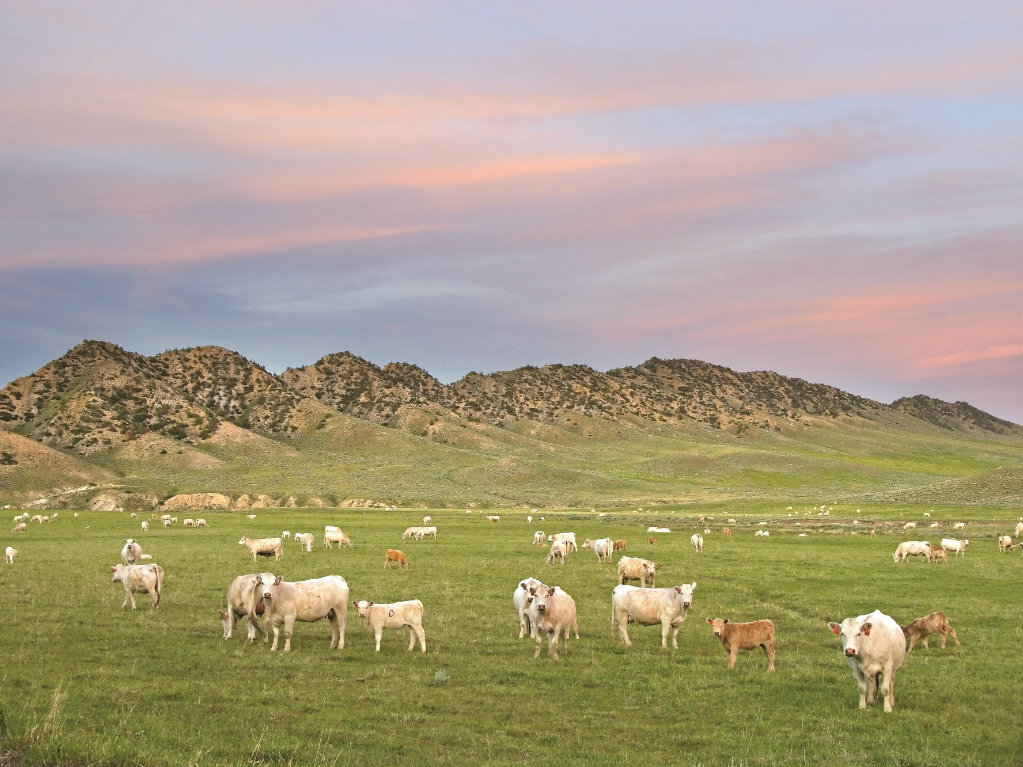 No. 52 Hunt Family 190,000 acres The history of Hunt Oil Company dates back to a starry night in 1934. Although H.L. Hunt initially focused on the...