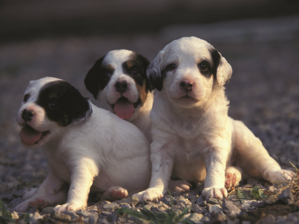 What do puppies need most of all? Routine, routine, routine! — Henry Chappell Puppy training starts the instant she stumbles through your front...