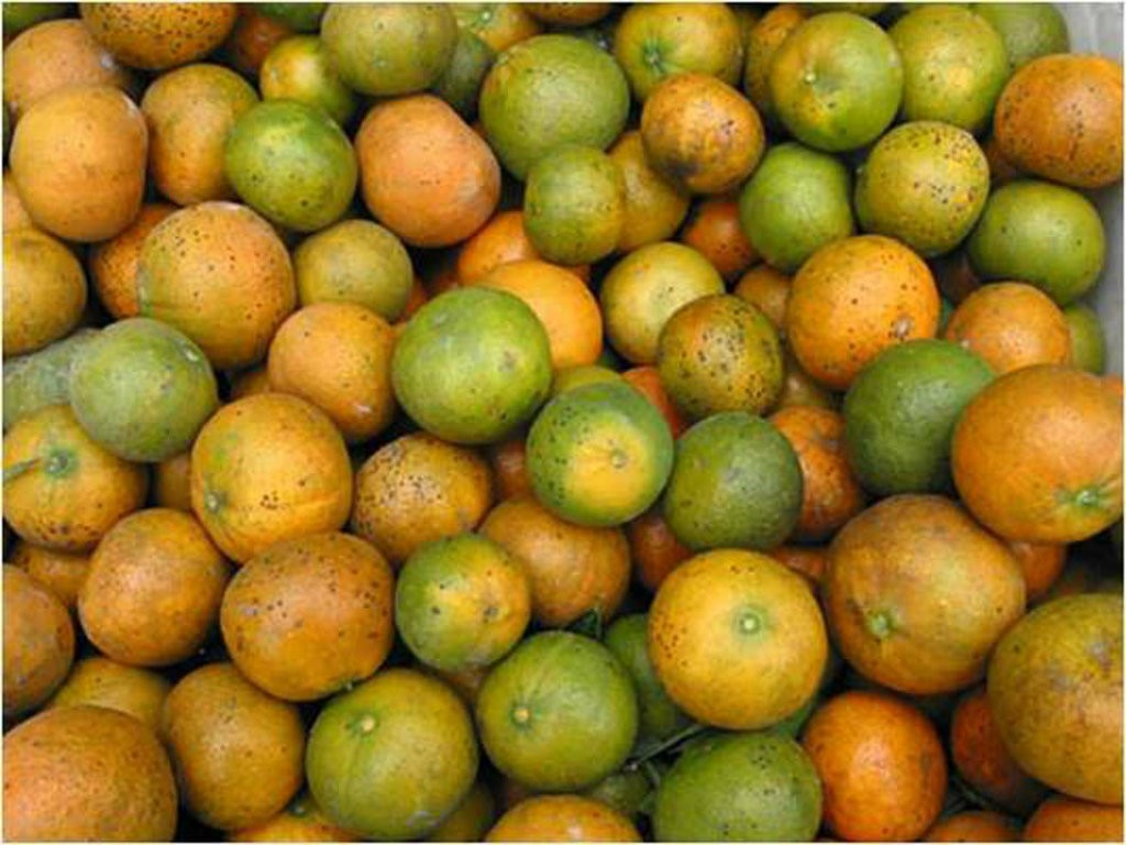 Secretary of Agriculture Tom Vilsack announced $30 million in funding for 22 projects to help citrus producers combat Huanglongbing (HLB). Better...