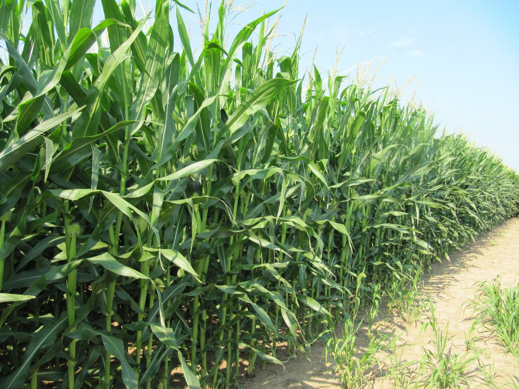 Despite record numbers for both corn and soybean production, the Seventh Federal Reserve District, which includes Iowa, Illinois, Indiana, Michigan,...