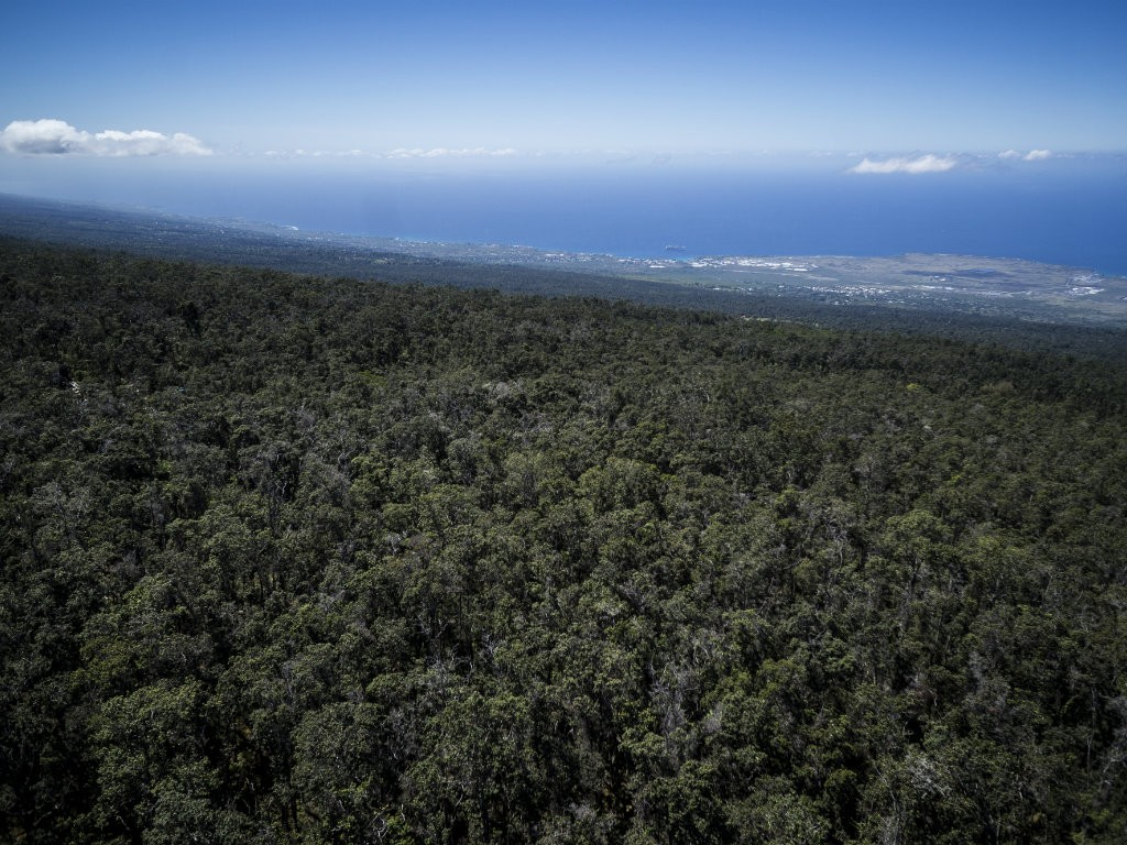The land, located in the Kaawaloa Forest between 2,300 and 4,300 feet in elevation, is rare native wet forest with a diversity of indigenous plants,...