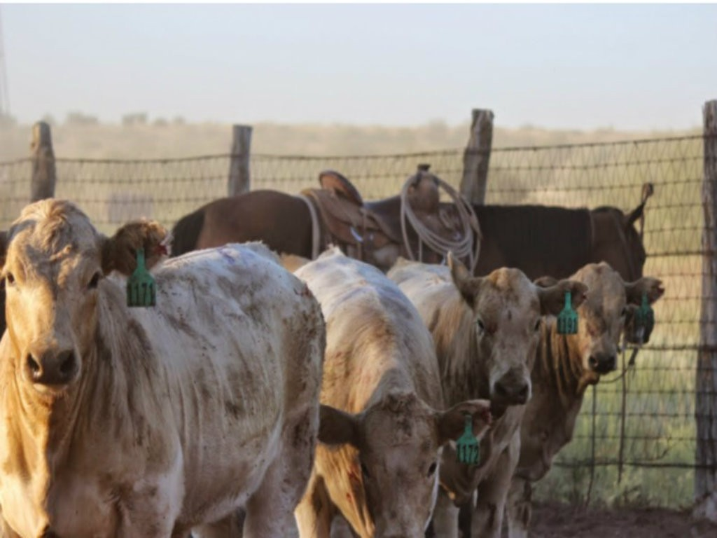 No. 60 Sugg Family 166,655 acres The romance of running cattle lured E.C. Sugg and his brothers to San Angelo, Texas, in the early 1900s. They stayed...