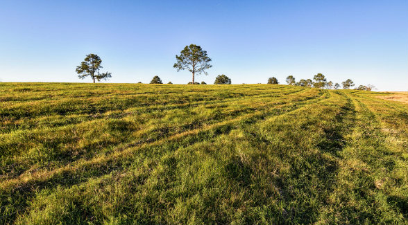 Rich pasturelands can be utilized to run cattle or converted to produce row crops.