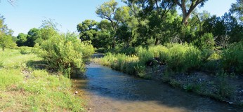 Ewell-Mimbres-River-Ranch-1