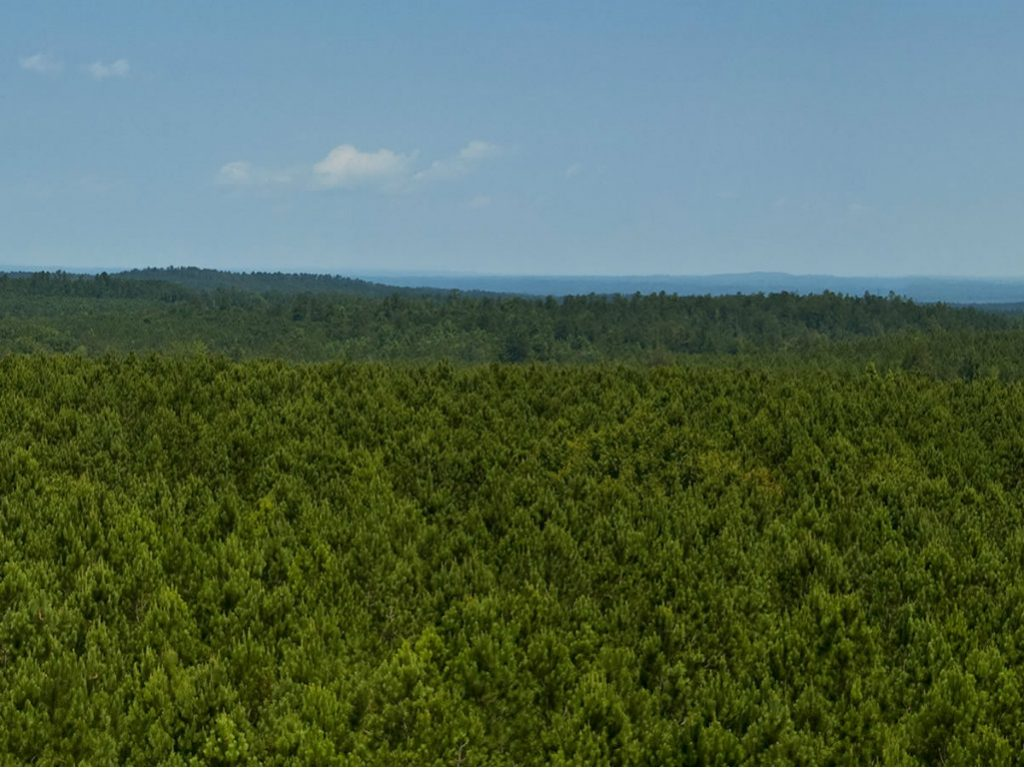 In June, publicly traded CatchMark Timber Trust (CTT) announced the acquisition of 51,700 acres of timberlands in South Carolina for $100.7 million...