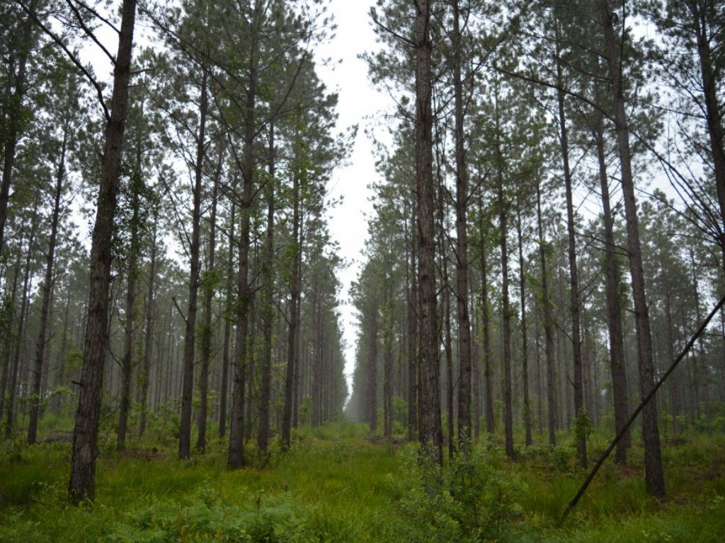 AFM Land Sales Offers Spout Springs The 17,045-acre pine plantation has been managed by current ownership and the previous two owners for pine...