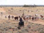 cattlestationaustralia_fi