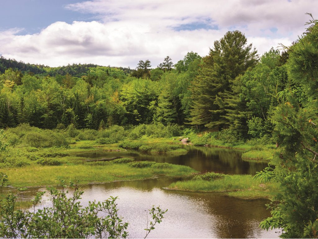 A Maine entrepreneur's extraordinary generosity spurs the creation of a North Woods gem. Burt's Bees cofounder Roxanne Quimby just put a big X on...