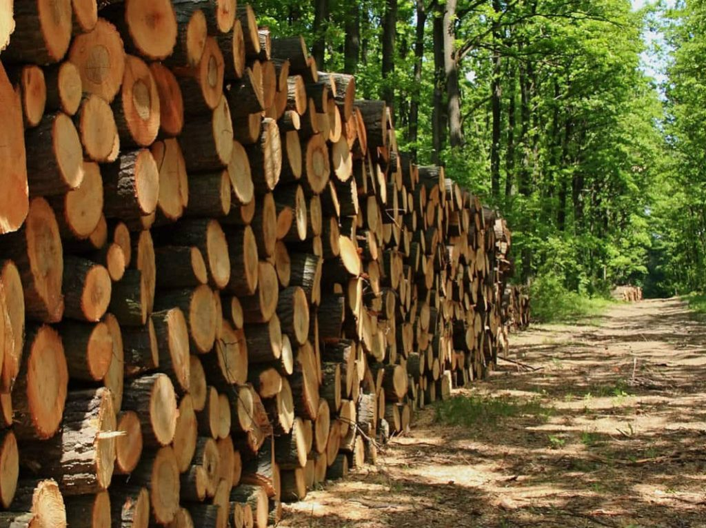 First Coast Land and Timber has purchased more than 17 square miles of timberland in Northeast Florida from Rayonier, the nation's third-largest...