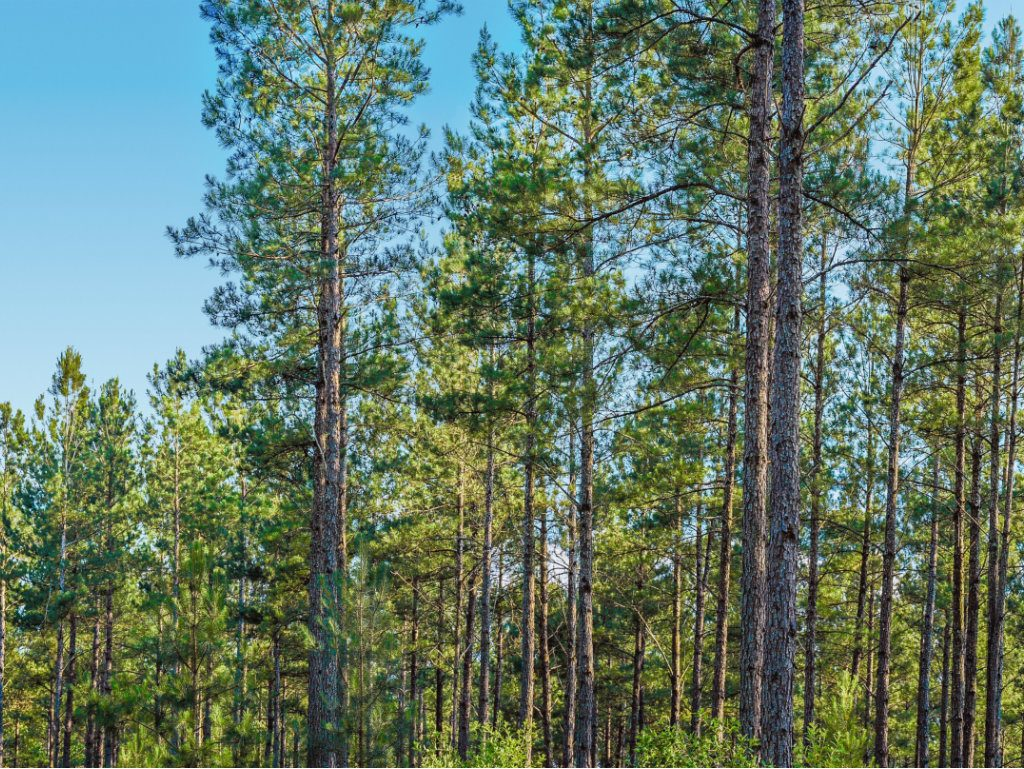 On July 24, Jackson-based Molpus announced that it will market 45,850 acres of investment-grade timber properties in the Southeast on behalf of a...