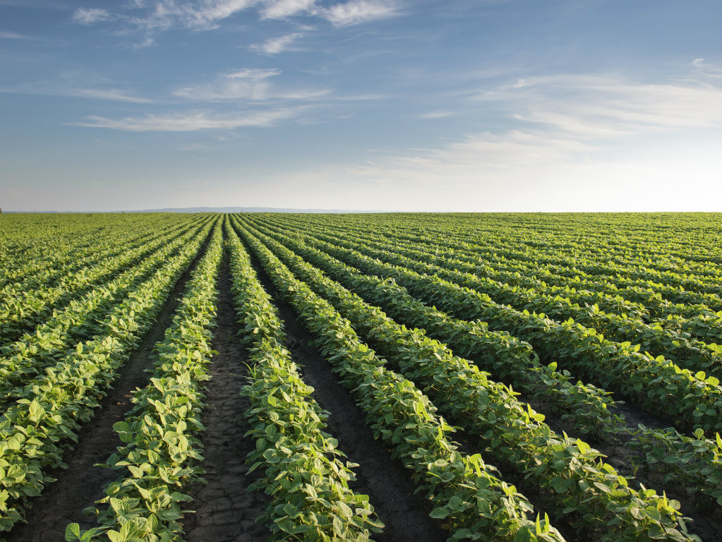 The Chicago Fed reports that a three-year slide in farmland values in the Seventh Federal Reserve District has come to an end. According to senior...