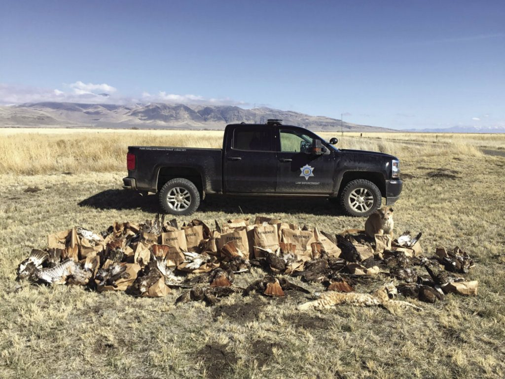 An anonymous tip helped California wildlife officers uncover the worst instance of raptor poaching in state history. Investigators discovered an...