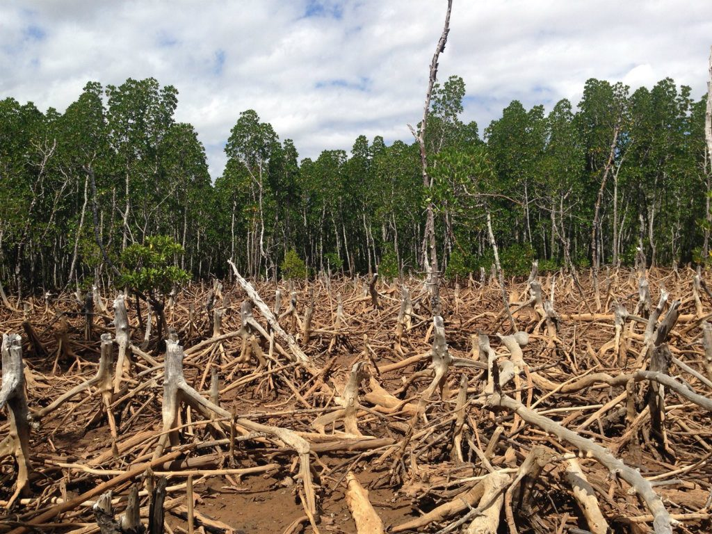 Scientists from the World Resources Institute and the University of Maryland have determined that last year was the second-worst year for tropical...