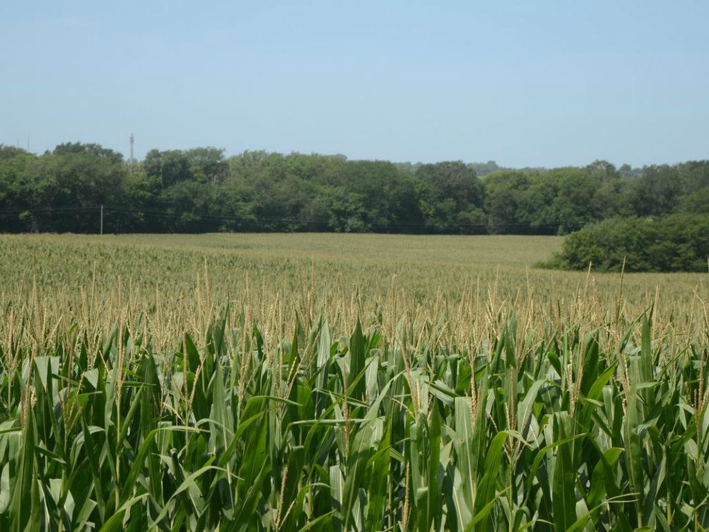 Surveys in Nebraska, Illinois, Indiana, and Iowa show strong, steady farmland values according to Successful Farming. An overall trend that supports...