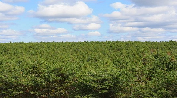 For Sale: 80,000 Acres of Wisconsin Timberland