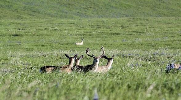 Land Report Top 10: Dana Ranch