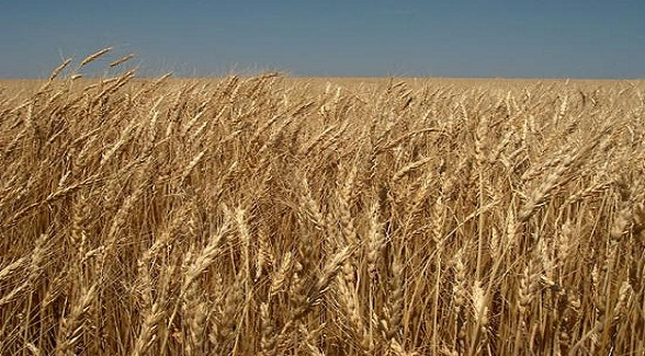 For Sale: Cropland in Eastern Colorado and Western Kansas