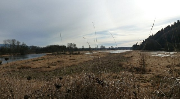 Columbia River Wetlands Restoration Project Begins