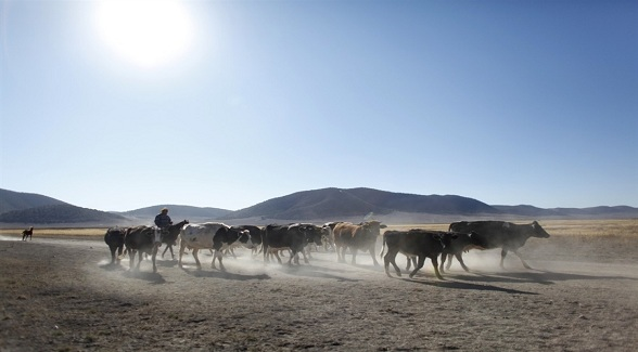 Drought Conditions Plague Mexican Ranchers and Farmers