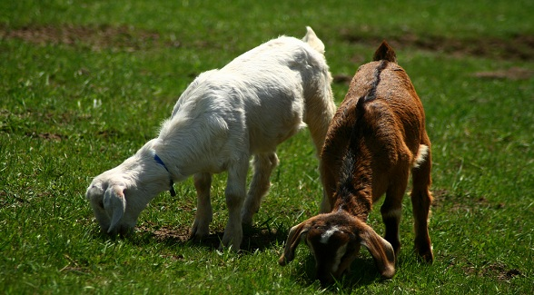 Federal Grazing Fees Remain Unchanged