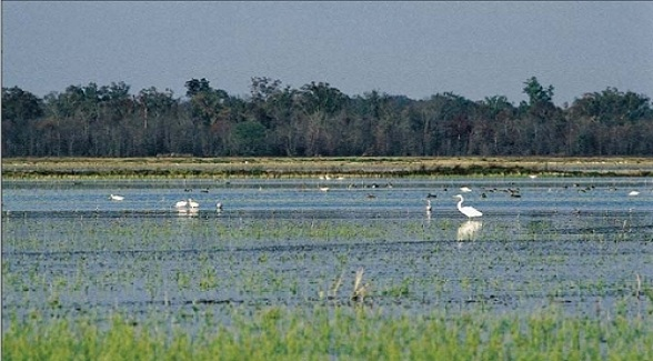 USDA Announces $32 Million Grant to Fund Restoration