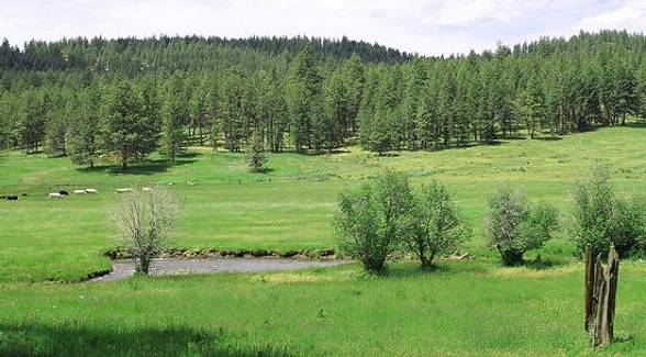 On the Block: 18,000 Acres of Prime Oregon Timber, Grazing & Recreational Land