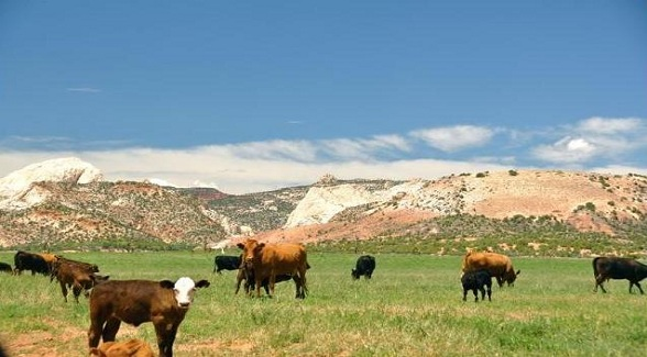 2011 Land Report Best Brokerages: Mirr Ranch Group