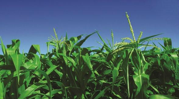 Drought Fails to Stem Rising Values