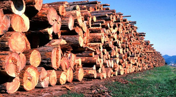 Housing Rebound Revives Timber Industry