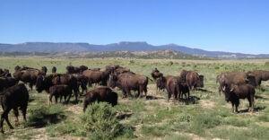 buffalo_view