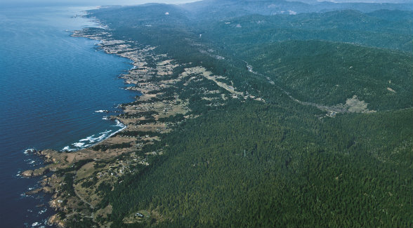 Ocean air wafts ashore over a narrow sliver of Northern California and creates the redwood forests of song and lore.
