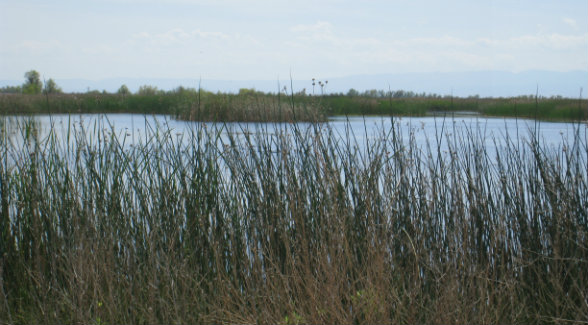 Wetlands_lg