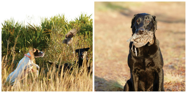 A timeless tradition perfected at Pine Creek: the pointing dogs do the finding, and the retrievers do the fetching.