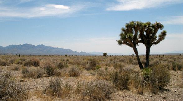 Basin_and_Range_Nevada_lg