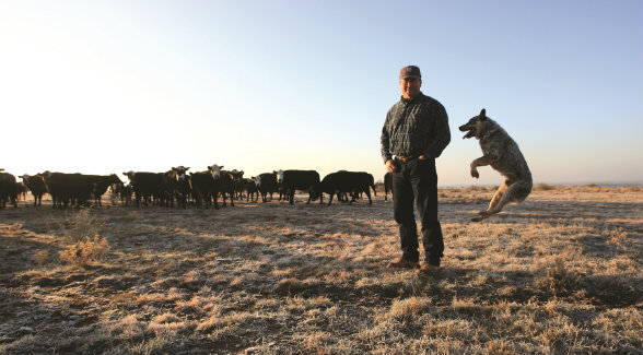 After feeding cattle on a cold winter morning, Bubba Withers enjoys a mirth-filled moment on the Four Sixes as chronicled in Working Dogs of Texas.
