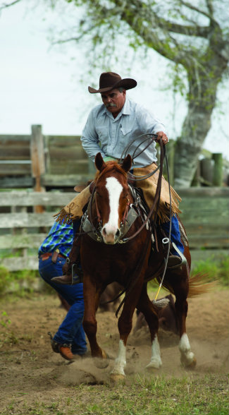 A good working cow horse, such as this son of Marsala Red, is a Kineño's most valuable tool.