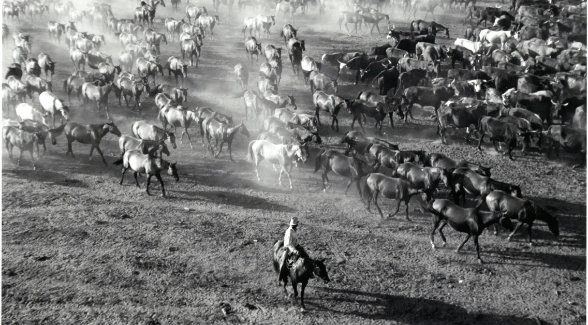 This classic Toni Frissell still from 1943 captures Kineños moving a remuda of cow horses at daybreak.
