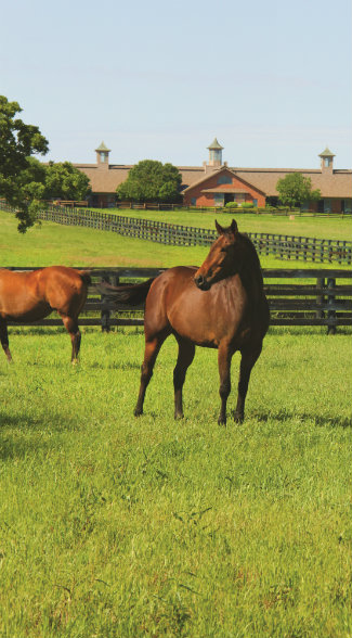 Valor Farm represents the epitome of the North Texas Horse Country, which features one of the largest concentrations of horse farms in the United States with dozens of breeds and disciplines represented.
