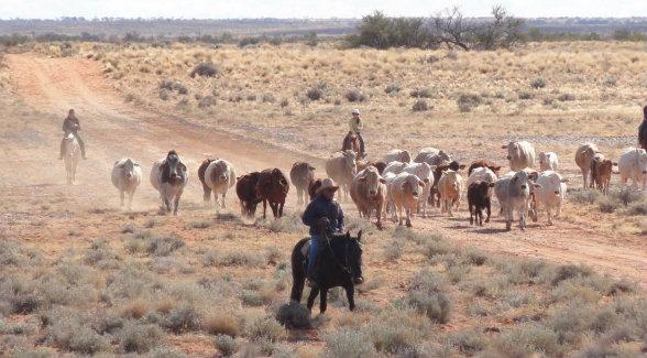 cattlestationaustralia_lg
