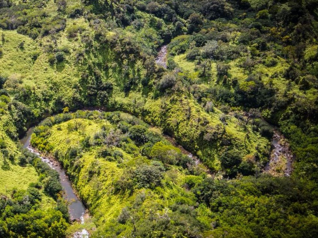 Spread across mountains and fields in Central Oahu are nearly 2,900 acres that are now known as the Helemano Wilderness Project. Hawaii News Now...
