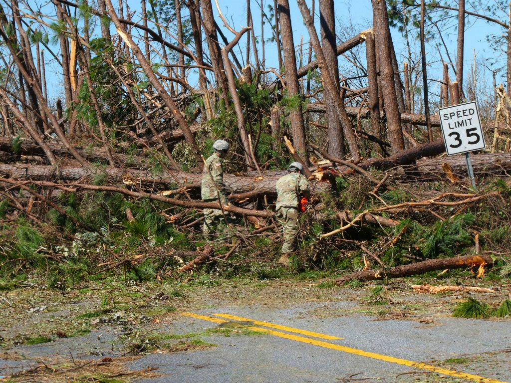 Hurricane Michael dealt a devastating blow to over 5 million acres of woodlands when it roared through Florida, Georgia, and Alabama in October,...